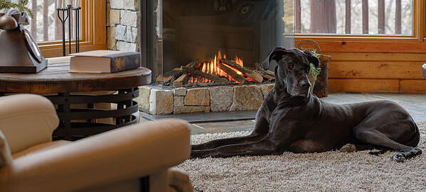Gas Fireplace with Dog